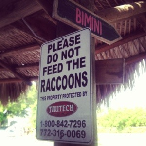 raccoon-sign-dave-masterson